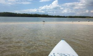 paddle board bunche beach - image