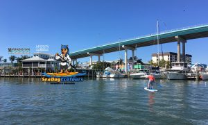 Paddle Board Tours Sea Dog Eco Tours - image