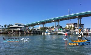 sea dog eco tours at Matanzas on the Bay - image