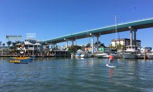 Paddleboarding Sea Dog Eco Tours - image
