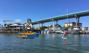 Sea Dog Eco Tours Paddle Board Center - image