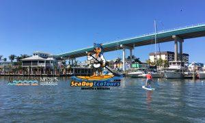 sea dog eco tours at Matanzas Inn - image