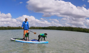 paddle boarding with dogs - image