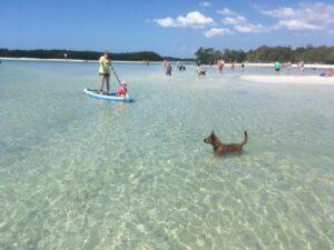 dog beach - image